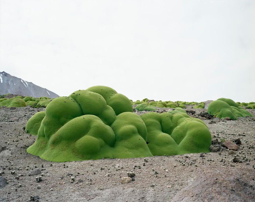 Rachel Sussman, La Llareta #0308-2B31 (3,000+ years old; Atacama Desert, Chile)